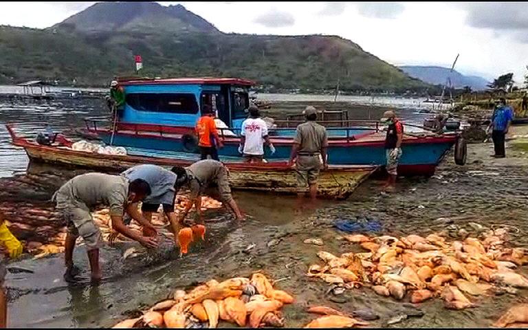 lake toba fish die-off august 2018, lake toba fish die-off august 2018 video, lake toba fish die-off august 2018 pictures