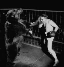 Combate bestial