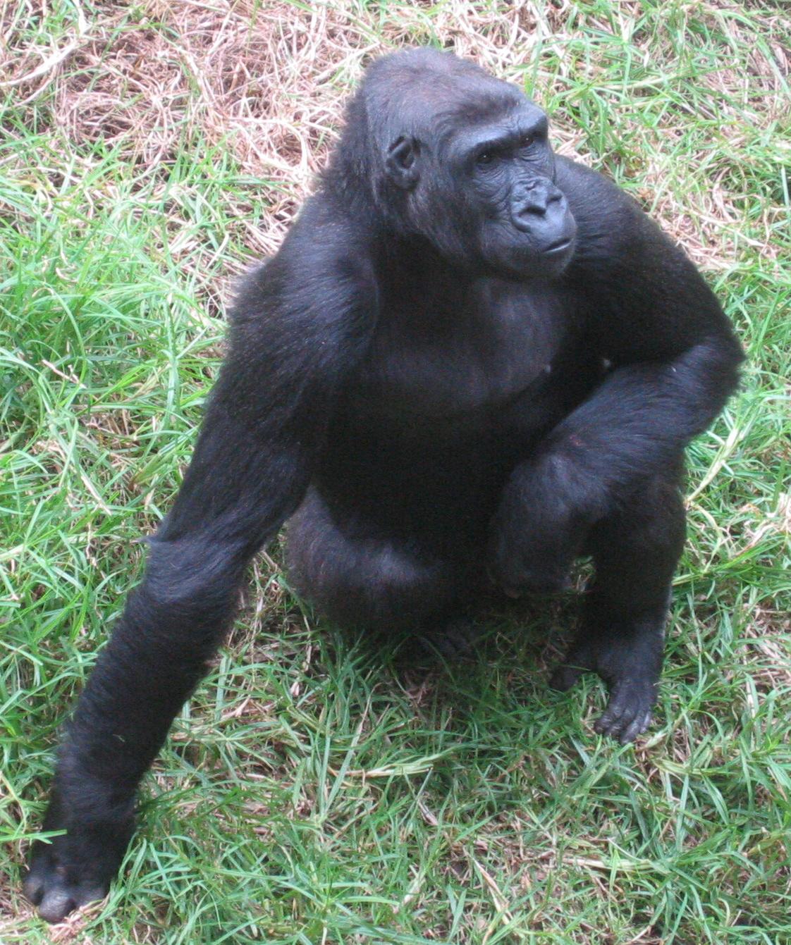 monkey sf zoo