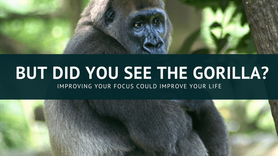 A large gorilla, relating to the gorilla video referenced in the text. The gorilla exercise is all about focus.