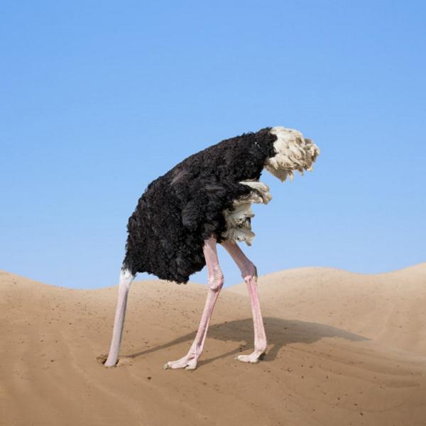 Strauß Kopf In Sand