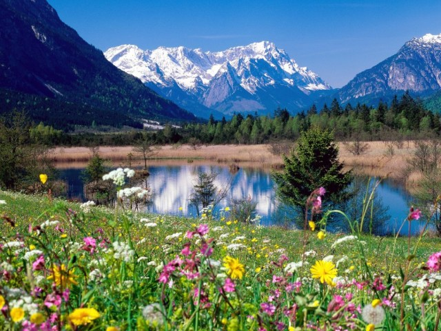 Mountain Lake Flowers