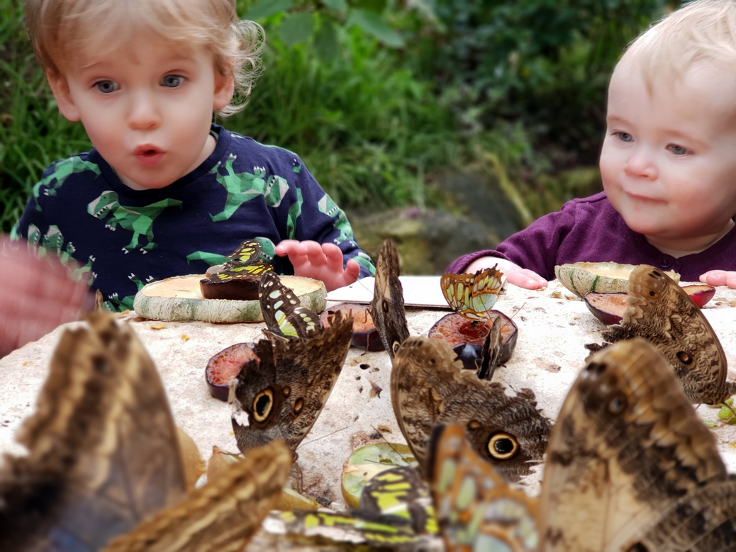 Visit Stratford-upon-Avon Butterfly Farm