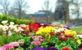 Spring flowers in Bancroft Gardens, ready for Shakespeare's birthday in Stratford-upon-Avon ©Stratfordblog.com