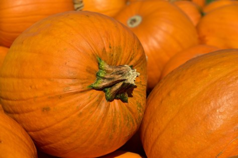 Where to go pumpkin picking in Stratford-upon-Avon - maybe Pumpkins R Us?
