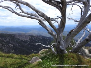 Reminders of the 2006 Alpine Fires abound on Mt Buffalo.