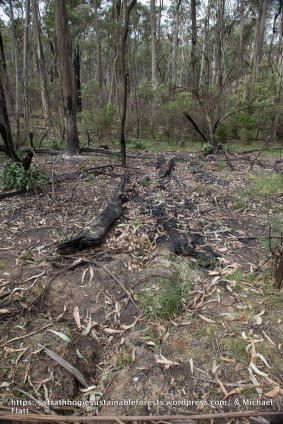 Remains of a large log on the forest floor - no more.