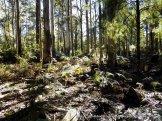 Fungi habitat along Parlours Tk 2