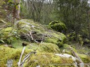 Mosses and ferns have certainly enjoyed this wet winter.