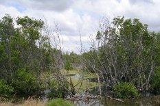 Mason Park Wetlands 10