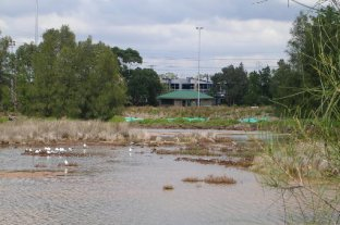 Mason Park Wetlands 2