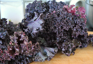 Amazing Red Kale from our CSA