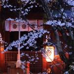 京都の桜 おすすめの穴場撮影スポット|北区編|今宮神社・上品蓮台寺・建勲神社