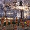 京都の桜 おすすめの穴場撮影スポット|中京区編②|六角堂・壬生寺