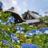 京都のあじさいのお寺でおすすめは?人気スポットの見頃や見どころ情報!