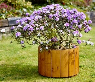 Tom Chambers Small-Arran-Planter available from strawberry garden centre uttoxeter