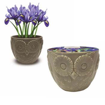 Taylors Bulbs AH97 Novelty Owl Planter available from Strawberry Garden Centre, Uttoxeter