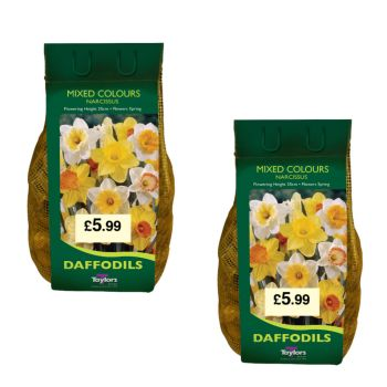 Taylors Bulbs DC60 Mixed colours Daffodils 2 x 2kg available from Strawberry Garden Centre, Uttoxeter