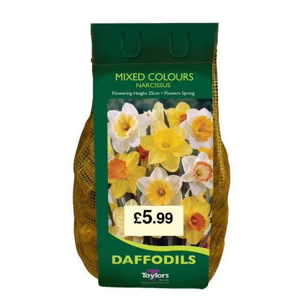 Taylors Bulbs DC60 Mixed colours Daffodils available from Strawberry Garden Centre, Uttoxeter