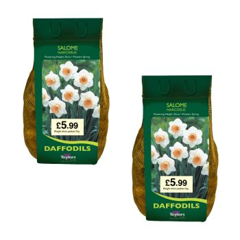 Taylors Bulbs DC74 Salome Daffodils 2 x 2kg available from Strawberry Garden Centre, Uttoxeter