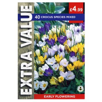 Taylors Bulbs EV123 Crocus Species Mixed available from Strawberry Garden Centre, Uttoxeter