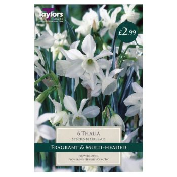 Taylors Bulbs TP263 Narcissus Thalia available from Strawberry Garden Centre, Uttoxeter