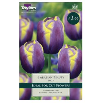 Taylors Bulbs TP380 Tulip Arabian Beauty available from Strawberry Garden Centre, Uttoxeter