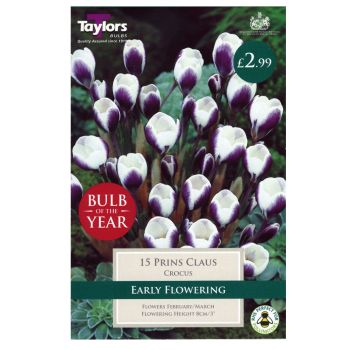 Taylors Bulbs TP673 Crocus Prins Claus available from Strawberry Garden Centre, Uttoxeter