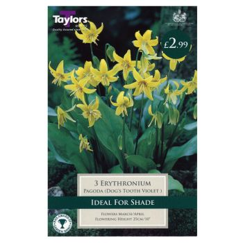 Taylors Bulbs TP743 Erythronium Pagoda available from Strawberry Garden Centre, Uttoxeter