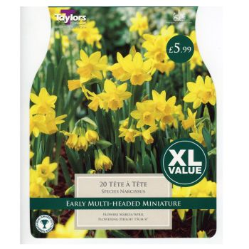 Taylors Bulbs XL260 Tete a Tete Narcissus available from Strawberry Garden Centre, Uttoxeter