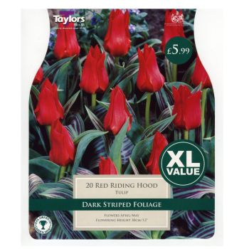 Taylors Bulbs XL522 Tulip Red Riding Hoods available from Strawberry Garden Centre, Uttoxeter