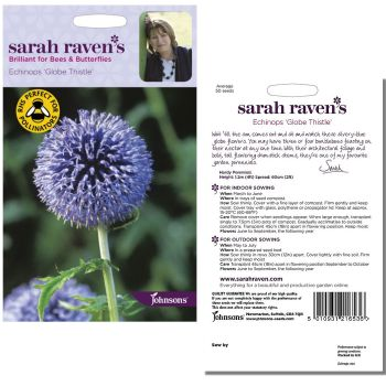 sarah-raven-echinops-globe-thistle-seeds-available-from-strawberry-garden-centre-uttoxeter