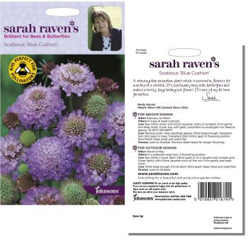 sarah-raven-scabious-blue-cushion-seeds-available-from-strawberry-garden-centre-uttoxeter