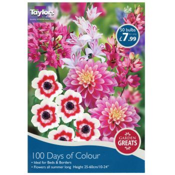 Taylors Bulbs SV306 100 days of colour bulb collection available from Strawberry Garden Centre, Uttoxeter