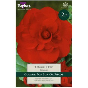 Taylors Bulbs TS205 Begonia Double Red bulbs available from Strawberry Garden Centre, Uttoxeter