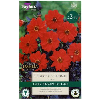 Taylors Bulbs TS302 dahlia bishop of llandaff available from Strawberry Garden Centre, Uttoxeter