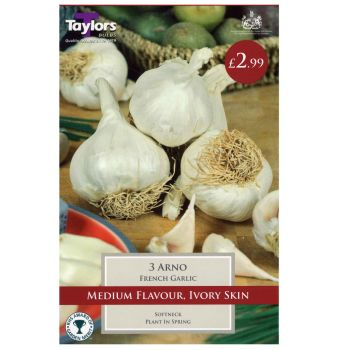 Taylors Bulbs sveg9d garlic arno available from Strawberry Garden Centre, Uttoxeter