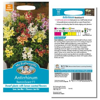 Mr. Fothergill Antirrhinum ReminiScent F1 Seeds available from Strawberry Garden Centre, Uttoxeter