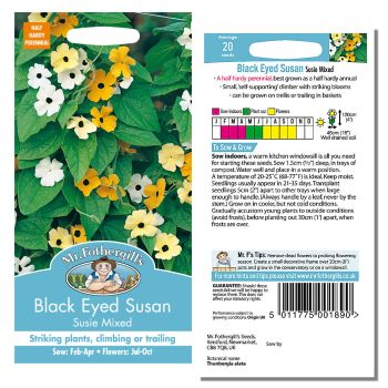 Mr. Fothergill Black Eyed Susan Susie Mixed Seeds available from Strawberry Garden Centre, Uttoxeter