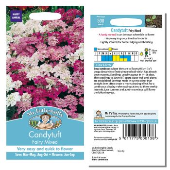 Mr. Fothergill Candytuft Fairy Mixed Seeds available from Strawberry Garden Centre, Uttoxeter