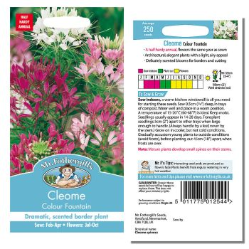 Mr. Fothergill Cleome Colour Fountain Seeds available from Strawberry Garden Centre, Uttoxeter