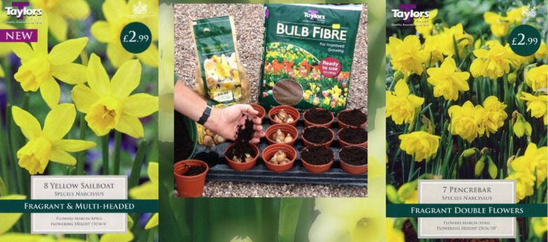 Times to plant daffodil bulbs available from Strawberry Garden Centre, Bramshall, Uttoxeter