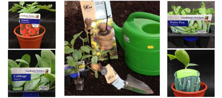 time to plant tomato & vegetable plants available from Strawberry Garden Centre, Uttoxeter