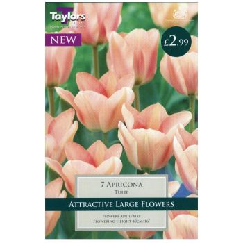 Taylors Bulbs TP400 Tulip Apricona available from Strawberry Garden Centre, Uttoxeter