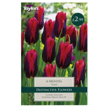 Taylors Bulbs TP406 Tulip Muvota available from Strawberry Garden Centre, Uttoxeter