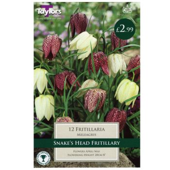 Taylors Bulbs TP752 Fritillary Meleagris Mixed available from Strawberry Garden Centre, Uttoxeter
