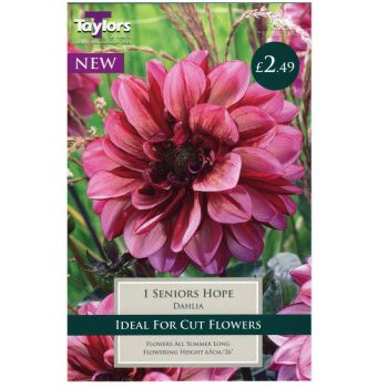 Taylors Bulbs TS482 dahlia seniors hope available from Strawberry Garden Centre, Uttoxeter