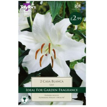 Taylors Bulbs TS533 lily casa blanca bulbs available from Strawberry Garden Centre, Uttoxeter