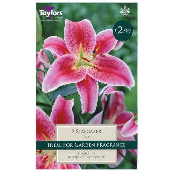 Taylors Bulbs TS545 lily stargazer bulbs available from Strawberry Garden Centre, Uttoxeter