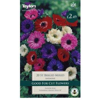 Taylors Bulbs TS627 Anemone St Brigid available from Strawberry Garden Centre, Uttoxeter